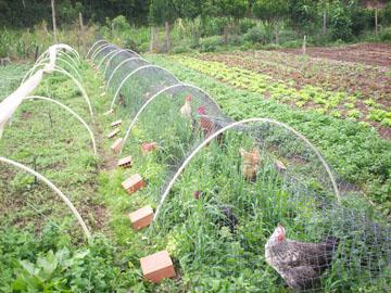 projeto_agroecologia_interno