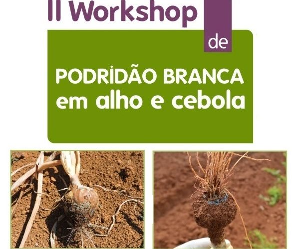workshop_copia