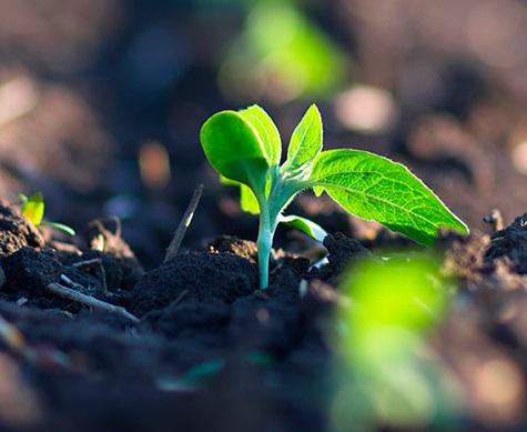 praticas-sustentaveis-agricultura